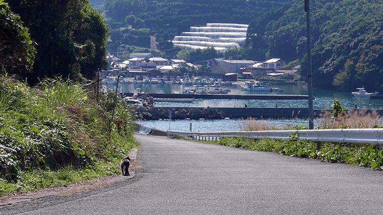 茂道漁港とネコ